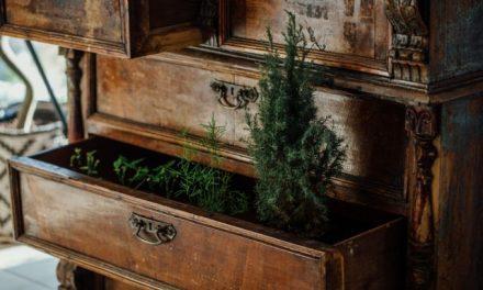 Rostliny jako dominanta interiéru: stálice i novinky posledních let