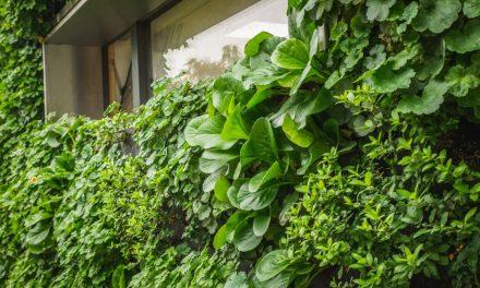 Vertikální zahrada v Brně poutá pozornost odborníků i kolemjdoucích