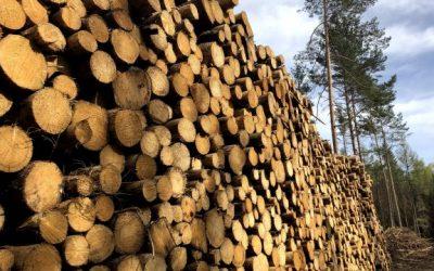 Dřevo, zázrak přírody